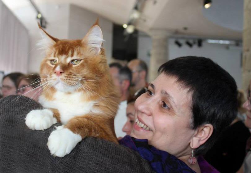 Criadores de gatos, entre la vocación y el negocio