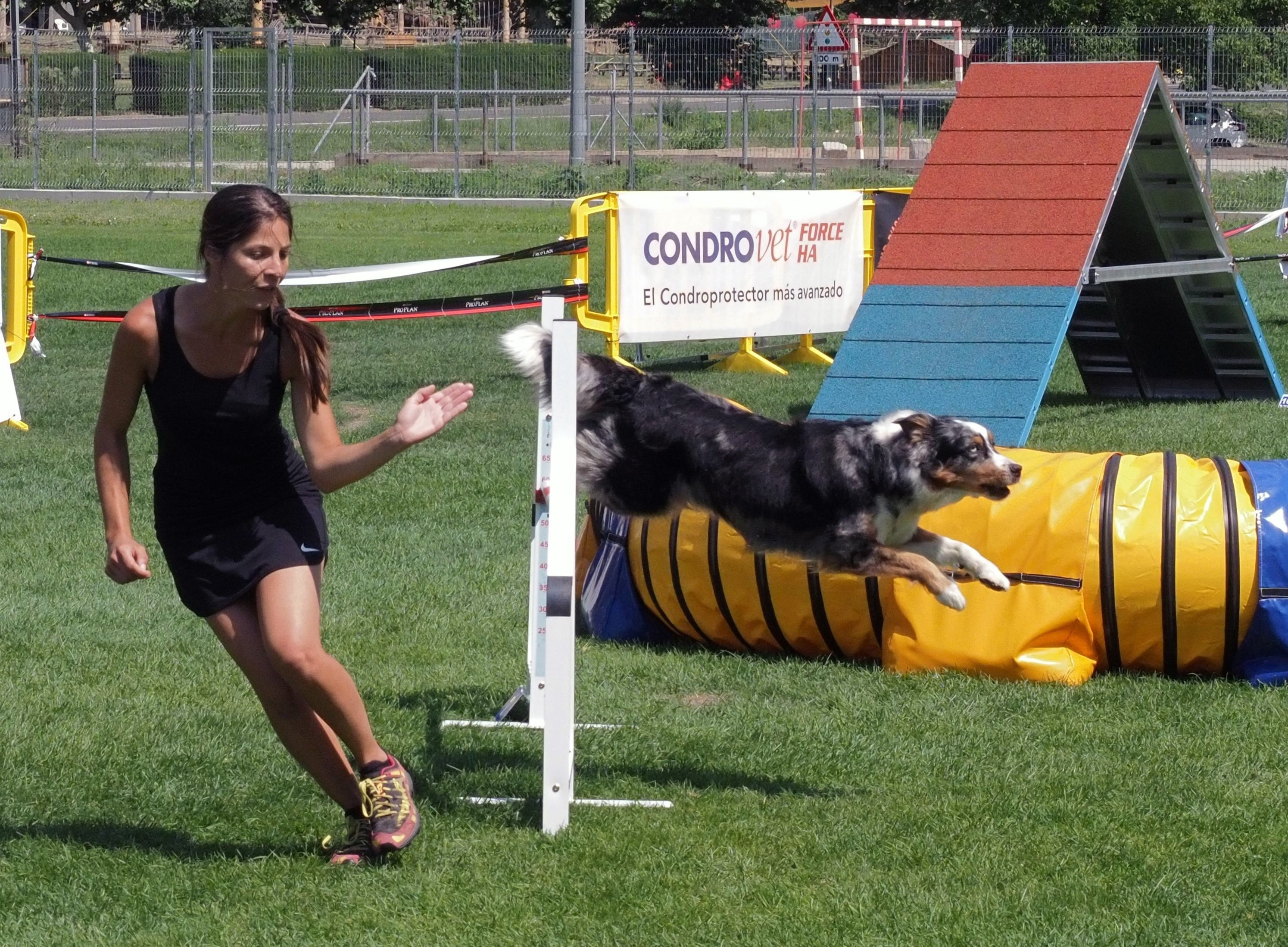 Rialp Summer Agility Competition 2019