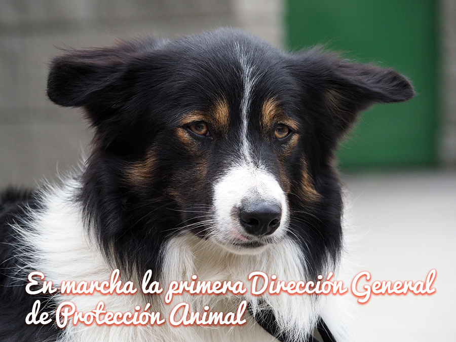 https://www.saludmascotas.com/actualidad/en-marcha-la-primera-direccion-general-de-proteccion-animal/