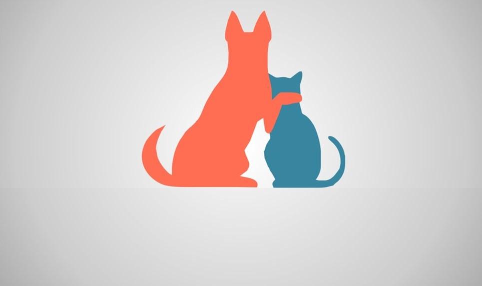 COVID-19 y animales domésticos. Cómo actuar