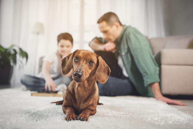 Consejos para vivir una cuarentena en positivo con nuestras mascotas