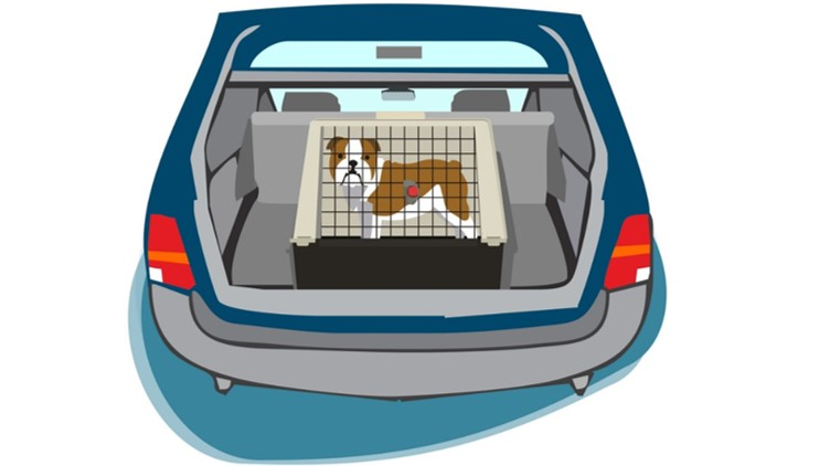 Viaja-seguro-mascota
