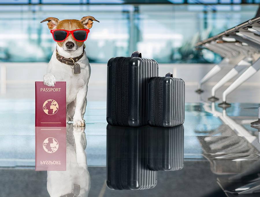 Los productos de Bioibérica al alcance de nuestras mascotas en el mercado internacional