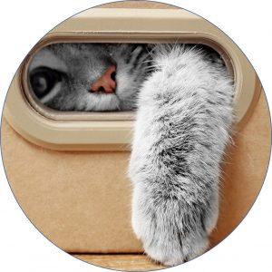 Leishmaniosis felina