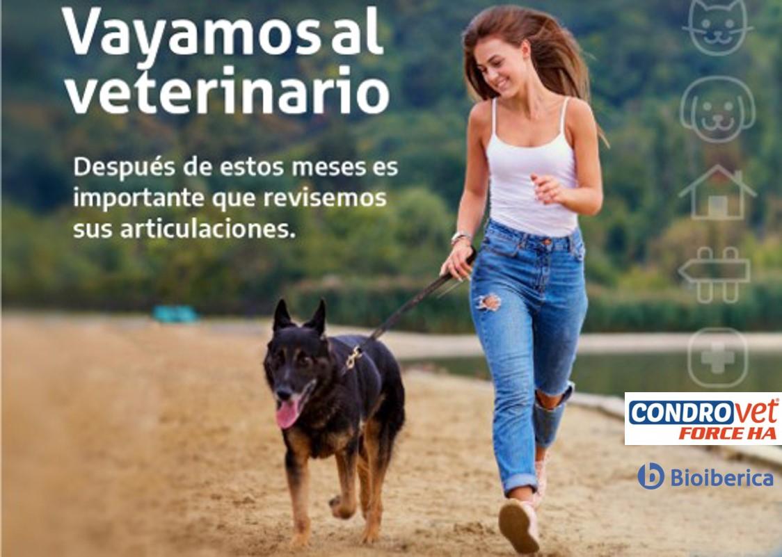 #Vayamosalveterinario