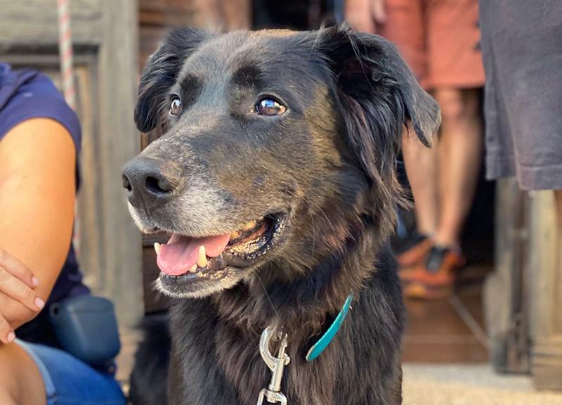Cine social. Cómo un perro puede ser un compañero fiel y ayudar a personas mayores