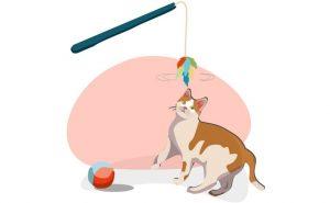 Pautas-básicas-adiestramiento-gatos