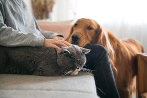 Confinamiento-cómo ha afectado a nuestras mascotas
