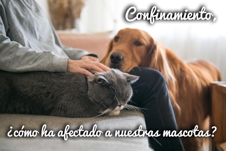 Confinamiento, ¿cómo ha afectado a nuestras mascotas?