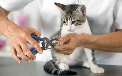 Cómo cortarle las uñas a tu mascota