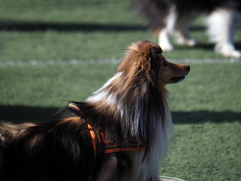 International Partnership for Dogs reclama medidas colectivas para la salud y el bienestar de los perros