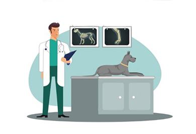 Los beneficios de los condroprotectores en la artrosis canina