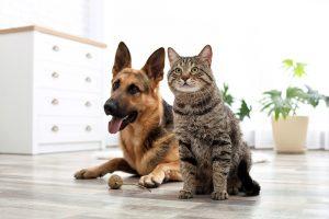 Recomedaciones veterinarias