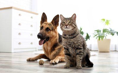 ¿Qué tratamientos veterinarios son recomendables para tus mascotas?