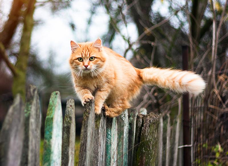 Las capacidades increíbles de tu gato
