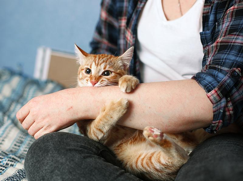 ¿Tu gato se muestra agresivo?