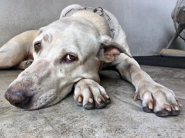 La Policía reclama la figura del perito veterinario en delitos contra los animales