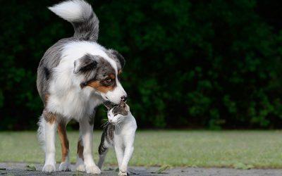 El Congreso da el primer paso para que los animales dejen de considerarse «cosas».