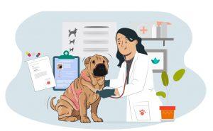 Dermatitis-atópica-perro_h