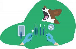 Cómo-cuidar dientes-perro