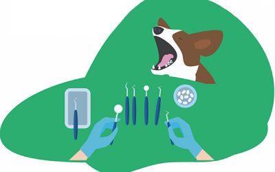 Cómo cuidar los dientes de tu perro